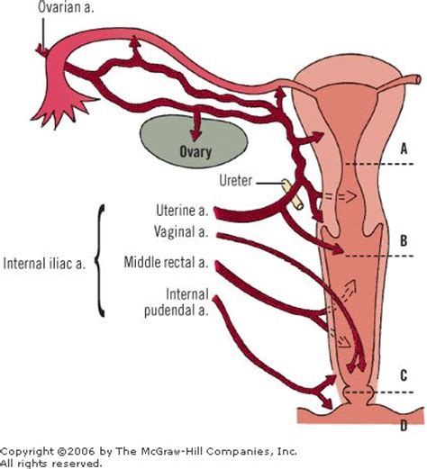 will viagra increase blood flow to the vagina picture 8