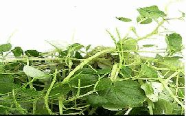 arthritis herbal treatment for sale in philippines picture 4