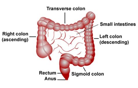after colon cancer sugery the tumor the size picture 8