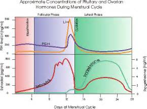 testosterone levels while pregnant picture 3