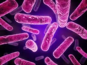 bacterial desease picture 9