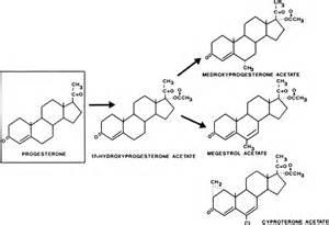 testosterone vs estrogen structure picture 9