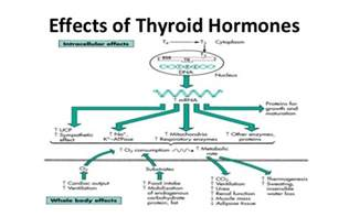 effects of carbonated soda on thyroid function picture 4