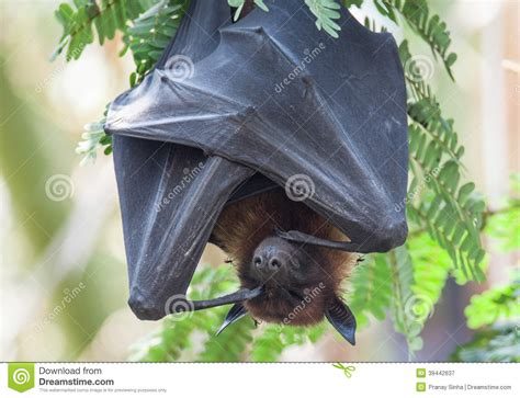 pictures of bats sleeping picture 13