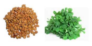 ancient herbals fenugreek picture 3