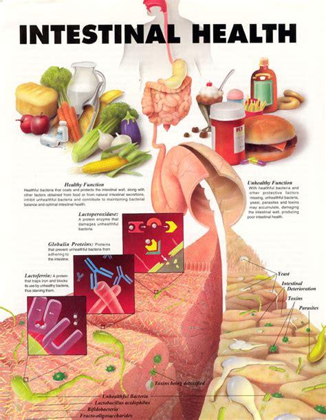intestinal health picture 1