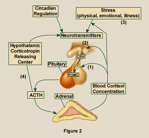 natural source of aldosterone picture 5