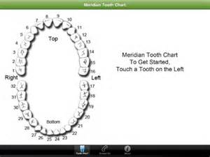 chart of your teeth picture 17