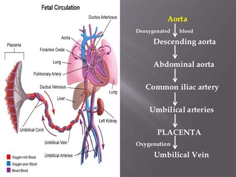 causes of decreased placental blood flow picture 6