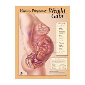 how much weight do i gain in pregnancy picture 6