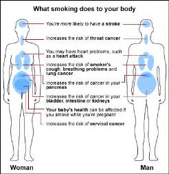 how does the body filter tobacco or smoke picture 2