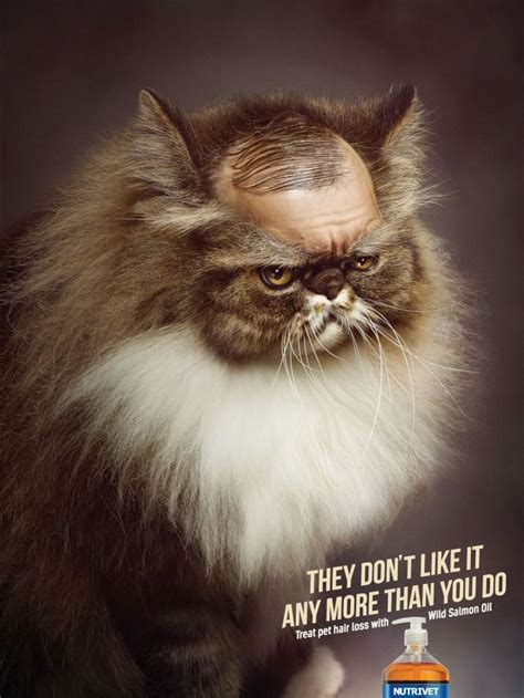 feline hair loss picture 10