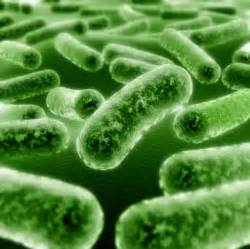 liver bacterial infections picture 1