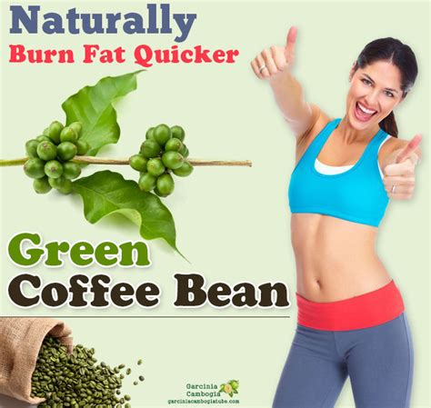 will you lose weight with green coffee bean picture 6
