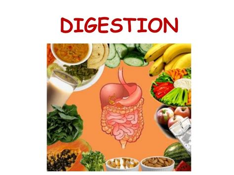 food digestion picture 15
