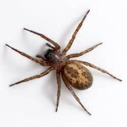 spider picture 1