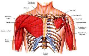 Chest muscle strain picture 5
