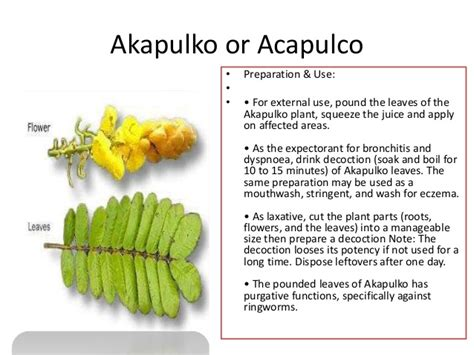 known herbal for abortion in philippines picture 12