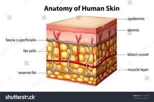 free illustrations of human skin images picture 14