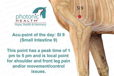 acupressure points for si joint paon picture 2