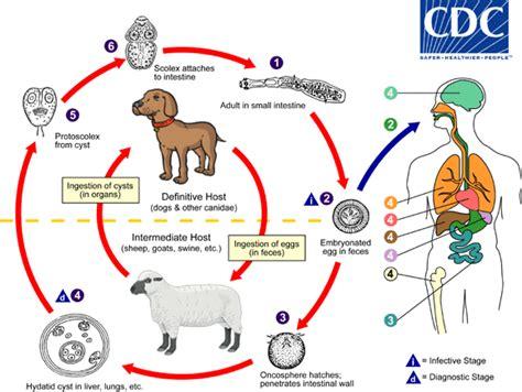 intestinal flu picture 11