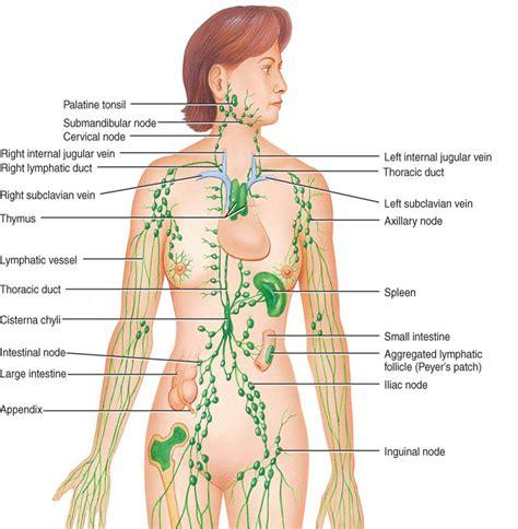back pain detox colon picture 13