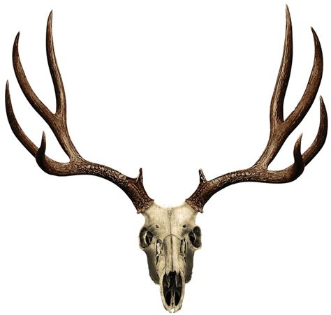 can deer antler cause picture 14