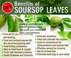 can soursop leaves cure fibroid picture 10