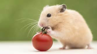 hamster h picture 6