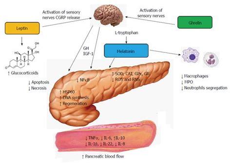 fat melts like er probiotic picture 5