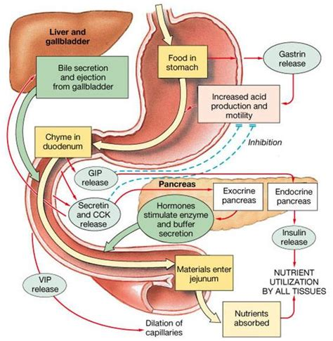 gastrointestinal tract activities picture 5