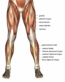 lower leg muscle pain picture 10