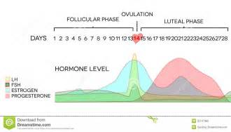 progesterone suppressed periods picture 5