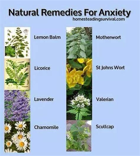 herbal remedies for depression picture 2