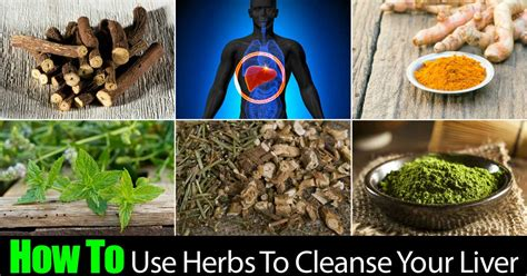 herbs for liver cleansing picture 7