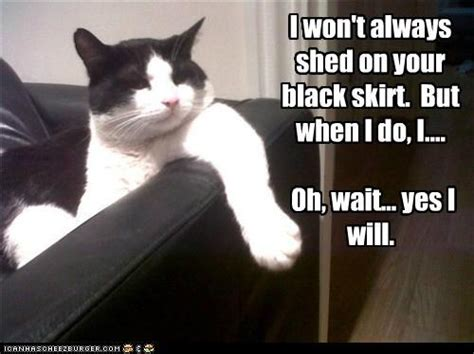 why cats loose their appees picture 3