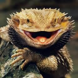 iguana skin health picture 17