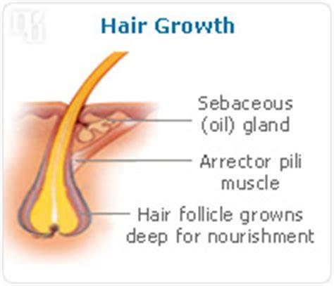 estrogen testosterone hair loss picture 7