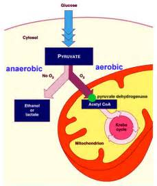 anaerobic picture 1