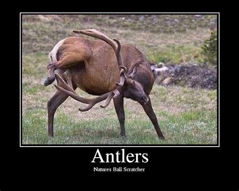 does deer antler spay make penis larger picture 10