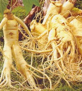 does red ginseng extract raise blood pressure? picture 10