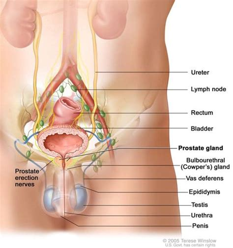 How to perform a prostate picture 6