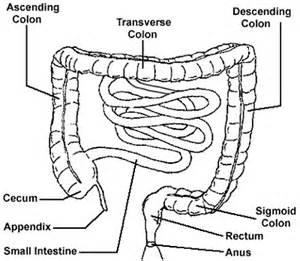 diagram descending colon picture 18