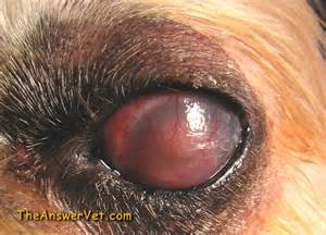 yeast infection in eyes picture 5