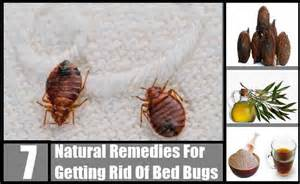 free herbal remedies for bugs picture 5