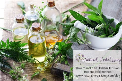 Best hot herbal herbs picture 2