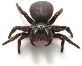 spider picture 3