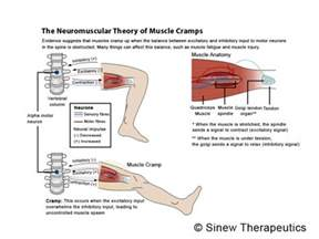 info on muscle spasms picture 13