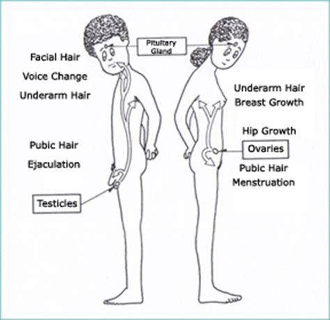 pubic hair and ageing picture 2
