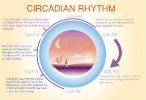 circadian rhythm sleep disorders picture 15